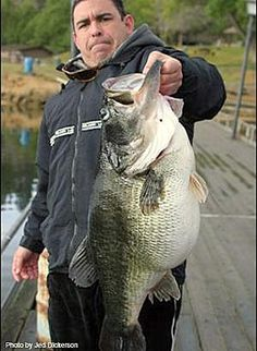 bass fishing images | Bass fishing is fun, but bass catching is better!
