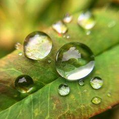 Rain drops  . . . . .  #top_macro #fingerprintofgod #macroshot #macro_secrets #macro_mood #macromood #macroworld #macro_highlight #igbest_macros #nature_brilliance #EarthVisuals #artofvisuals #welivetoexplore #natureaddict #naturediversity #ourplanetdaily #earth_deluxe #instanaturelover #nature_prefection #allnatureshots #portland #pdxnow #pdx #travelportland #portlandnw #downtownpdx #iphoneography #iphoneonly #iphonesia #iphoneography #focalmarked