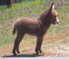Baby burro-someday my sister and I will have a small hobby farm. We would only eat the eggs, no animals. :)