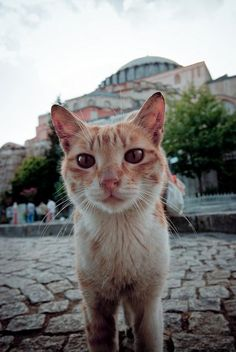 #Istanbul's #cats number in the hundreds of thousands, and they're beloved and respected by almost everyone.