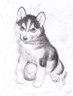 How To Draw A Husky Puppy