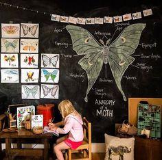 Chalkboard Doodles, School Chalkboard, Chalkboard Walls, Home Learning, Learning Spaces, Fall Preschool, Play To Learn, Fauna, Toddler Activities