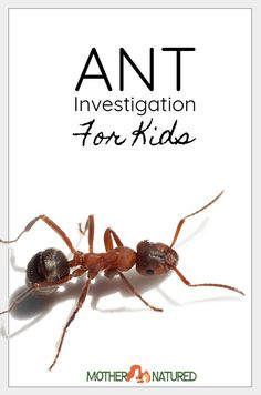 Here's simple ant experiment for kids that will encourage curiosity and science enquiry! They'll love finding out what ants love to eat! Kindergarten Science Experiments, Preschool Science, Science Experiments Kids, Science Lessons, Insect Activities, Nature Activities, Science Activities For Kids, Science Centers, Insects For Kids