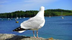 💚 Check out this free photoWhite and Black Albatross    🏁 https://avopix.com/photo/47995-white-and-black-albatross    #bird #aquatic bird #swan #feather #goose #avopix #free #photos #public #domain