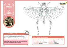 """Bring some colour into your life with these scientifically sound colouring pages! 🎨🦋 For both kids and adults 😊 Did you know that drawings are often used in entomology (""""insect-ology"""")? Some physical characters are not always clearly visible on a photo. With the help of drawings, we can get a better idea of the shape and structure of the animal or characteristic being examined 🤓 Colouring Pages, The Help, Photo And Video, Museum, Characters, Shape, Animal, Drawings, Kids"""