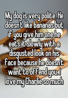 My dog is very polite. He doesn't like bananas but if you give him one he eats it slowly with a disgusted look on his face because he doesn't want to offend you. I love my Charlie so much