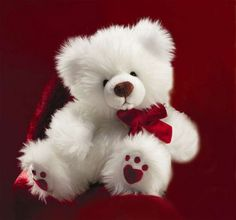 Teddy bears are cute & classic..aren't they?