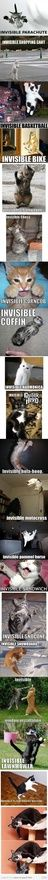 Invisible cat animals-cats-domestic