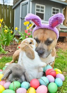 """Bunnies with the """"Easter Bunny D o g?"""""""