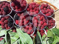Raspberries and blackberries in weaving basket. Blackberries, Basket Weaving, Royalty, Strawberry, Fresh, Photography, Image, Food, Raspberries