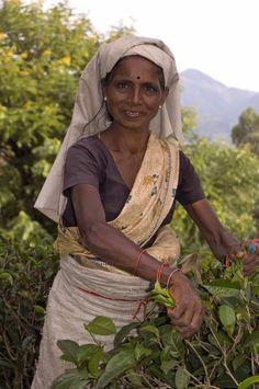Sri Lanka travel photography tea plantations Ella holiday
