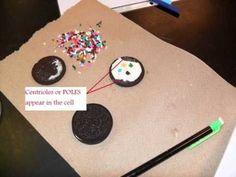 Mitosis using oreos - edible biology!