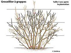 comment tailler le pommier en palmette imprim s artistiques taille arbre fruitier jardins. Black Bedroom Furniture Sets. Home Design Ideas