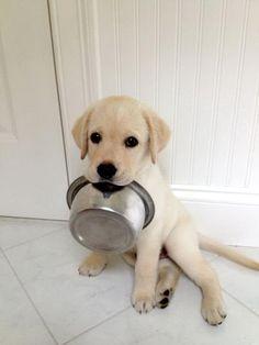 Breakfast please!
