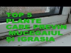 Top 5 plante care previn mucegaiul si igrasia! - YouTube Youtube, Top, Interiors, Plant, Spinning Top, Youtubers, Crop Shirt, Blouses