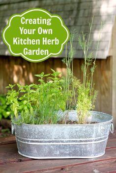 Creating Your Own Kitchen Herb Garden - Pretty Extraordinary Herb Garden In Kitchen, Kitchen Herbs, Kitchen Ideas, Kitchen Decor, Container Gardening, Gardening Tips, Indoor Gardening, Indoor Greenhouse, Balcony Gardening
