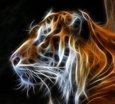 Tiger Fractal Photograph