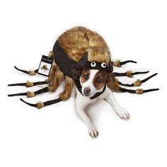 Spider Dog Costume, YES! Might be terrified if this came running at me :) #halloween