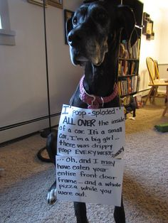 dog shaming...an excellent thing to do. This is my dog being shamed.