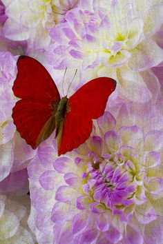 Red Butterfly On Dahlias Print By Garry Gay