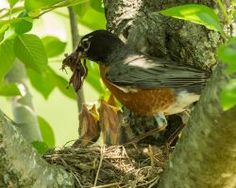 You check off the first step in birdscaping when you look at your yard from a bird's point of view. More than bird baths and feeders staged here and there, birdscaping is planning and planting to not only attract, but nurture wild birds. Megan Lacey, a horticulturist at Lewis Ginter Botanical Garden, is a birdscaper …