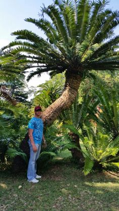 E . altensteinii  DBN botanical gardens ( April 2015) Planting Seeds, Planting Succulents, Sago Palm, Hardy Plants, Exotic Plants, Plant Design, Tropical Garden, Trees To Plant, Botanical Gardens