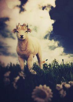 The Little Lamb Prince: Woodland Art Print por ThisYearsGirl