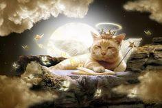 hd fantasy art cats - animal fantasy art