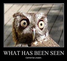 Owl Sex