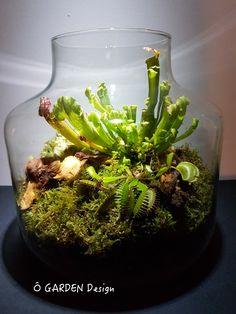 Unique Closed Glass Terrarium Ideas for Plant