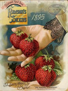 'The Marshall Strawberry' from 'Illustrated Hand Book' Rawson's Vegetable and Flower Seeds. Department of Agriculture, National Agricultural Library. Vintage Labels, Vintage Ephemera, Vintage Postcards, Vintage Ads, Vintage Images, Seed Illustration, Food Illustrations, Strawberry Kitchen, Strawberry Art