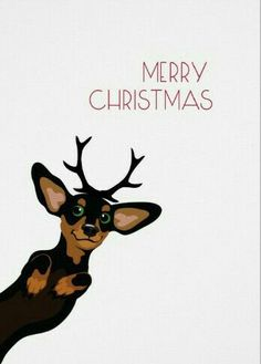 Merry Christmas from Your Fav~O~Rite Doxie ✝ 🎄 ✝ 🎄 Christmas Animals, Christmas Dog, Christmas Humor, Christmas Dachshund, Merry Christmas, Christmas Holidays, Arte Dachshund, Mini Dachshund, Daschund