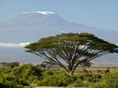 Mount Kilimanjaro, TanzaniaMount Kilimanjaro could look drastically different in our lifetime. The snow is rapidly melting, and scientists predict that it will only be white-capped for another 15 years.