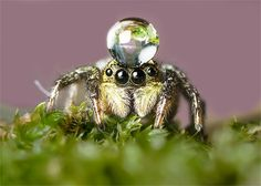 by OKAWA โอ้กะหว้า. somchai, via Weird Insects, Cool Insects, Lucas The Spider, Ant Insect, Spider Face, Cool Bugs, Jumping Spider, Timorous Beasties, Beautiful Bugs