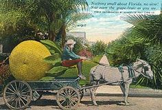 An artist known only as Leigh was recognized for his partially hand-tinted, black and white images of gigantic fruits on horse-drawn carts in Florida. All of the cards were copyrighted in 1909.