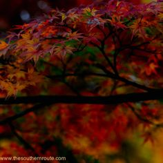 Indian summer of Kyoto by regis boileau, via 500px