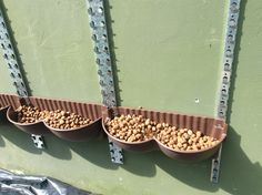 Detalhe de instalação do Sistema Mamute - uso de argila expandida para reter água sem deixar as raízes empapadas!
