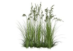 tall grass png - Google Search