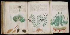 The Voynich Manuscript. This manuscript is a book full of writings, illustrations and diagrams that are in a language that is still unknown. The entire manuscript is a mystery, right down to the plants depicted. Voynich Manuscript, Medieval Manuscript, Archaeological Discoveries, Archaeological Finds, Medieval Books, Unexplained Mysteries, Ancient Mysteries, Unexplained Disappearances, Astrology