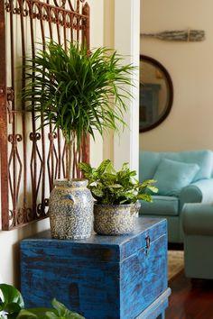 Great Indoor Trees | Indoor trees, Indoor and Apartments