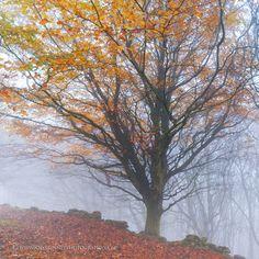 Castleton  Peak District National park  England