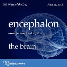 "Encephalon - Anatomy. the brain.                              Origin: Encephalon is a New Latin construction that can be traced to the Greek enképhalos meaning ""within the head,"" or, as a masculine noun, ""brain."" The Greek root kephalḗ means ""head."" It entered English in the mid-1700s."