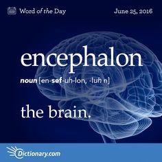 Dictionary.com's Word of the Day - encephalon - Anatomy. the brain.