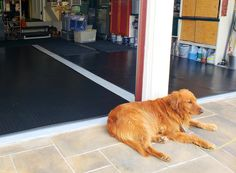 The BLT Coin Pattern mats are easy-to-install, functional, and beautiful. No wonder this pup is guarding such a valuable asset! More dog pics: Garage Floor Mats, Garage Flooring, Dog Photos, Dog Pictures, Cool Garages, Cute Dogs, Pup, Home Improvement, Corgi