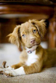50 Cute Puppies I Adore | Showcase of Art & Design