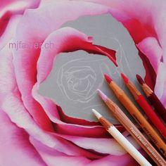 #fleur #rose #couleurs #colors #pastelsec #softpastel #softpastelart #pastelmat #dessinrealiste #realismart #realisticart #artwork #pastelart #pastelartist #pasteldrawing #pastelpainting #pastelpencils #carbothello #carandache #pittpastel #botanicalartist #botanicaldrawing #suisse #switzerland Soft Pastel Art, Pastel Drawing, Caran D'ache, Pastel Pencils, Botanical Drawings, Realism Art, Switzerland, Rose, Colors