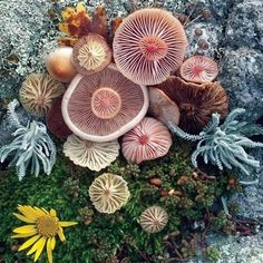 Beautiful biology. Xk #nature #flowers #photography #inspiration