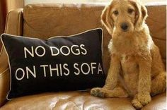 I need one of these signs.  Can dogs read?  Hahaha