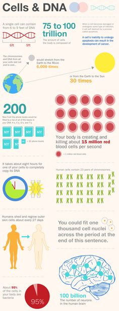 Cells & DNA Basics