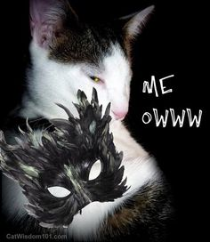 Would you know if your pet is in pain? Learn how. Vet 101: The Ow in Meow Cat Wisdom 101  #catsofinstagram #cats